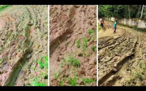 গোলাপগঞ্জের মোল্লারচক-বসন্তপুর রাস্তার বেহাল দশাঃধানের চারা লাগিয়ে প্রতিবাদ
